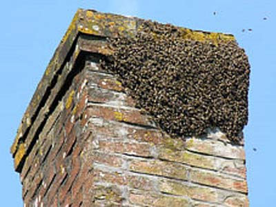 How to remove bees in your chimney solutioingenieria Images